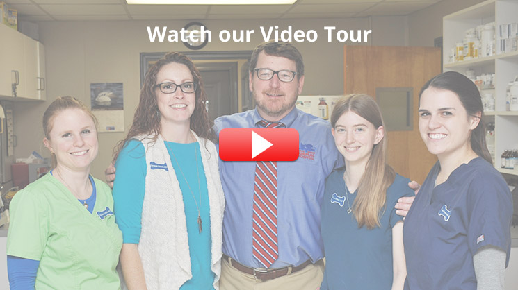 Video Tour Belle Meade Animal Hospital Nashville TN